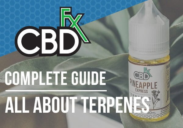 All About CBD Terpenes