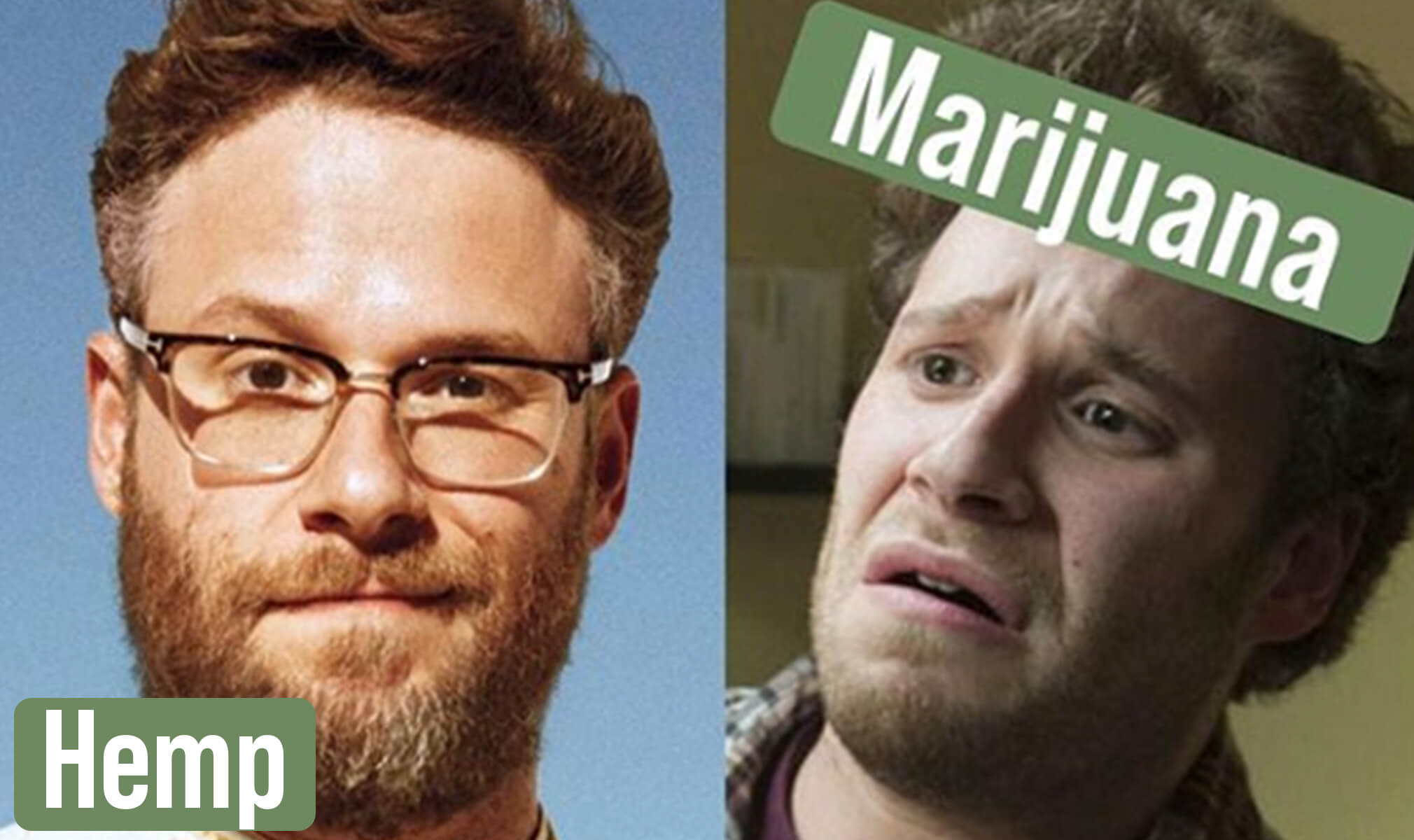 What's The Difference Between Hemp And Marijuana